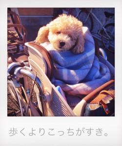 ちょび部_4885